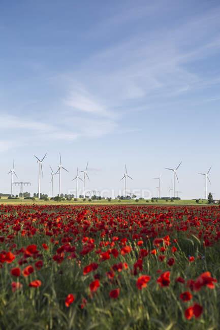 Красный мак цветет в летнем поле с ветряными турбинами на заднем плане — стоковое фото