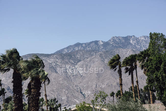 Пальмы с горным хребтом на заднем плане под ясным голубым небом — стоковое фото