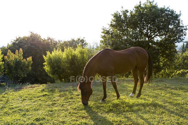 Выпас лошадей в солнечный день — стоковое фото