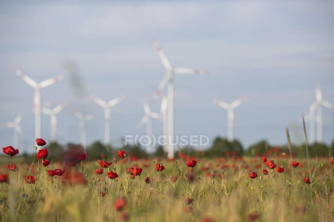 Красный мак цветет в сельской местности луг с ветряными турбинами на заднем плане — стоковое фото