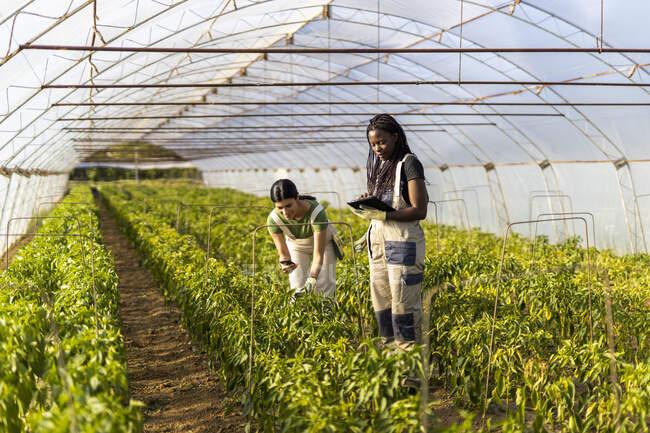 Женщины-фермеры используют беспроводные технологии в теплице — стоковое фото