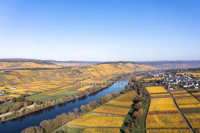 Германия, Рейнланд-Пфальц, Вертолетный вид на реку Мозель и окружающие виноградники осенью — стоковое фото