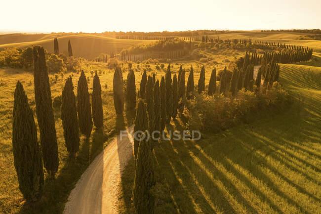 Деревянная дорога, извивающаяся по крутящемуся пейзажу на закате — стоковое фото