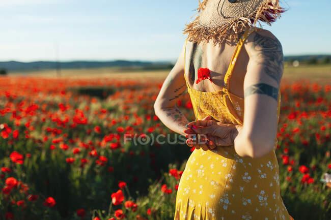 Женщина, держащая цветок мака за полем — стоковое фото