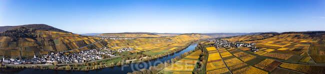 Германия, Рейнланд-Пфальц, Вертолетная панорама реки Мозель и окружающих виноградников осенью — стоковое фото