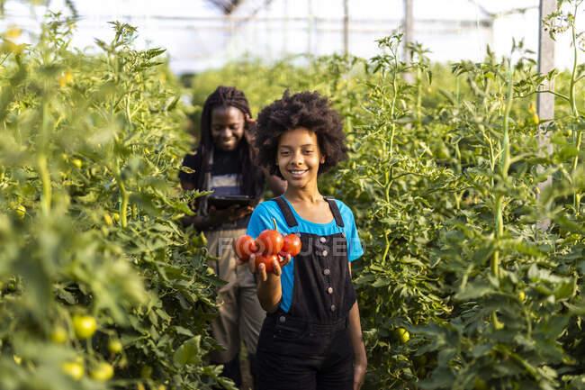 Улыбающаяся девушка со свежими помидорами стоит в оранжерее — стоковое фото