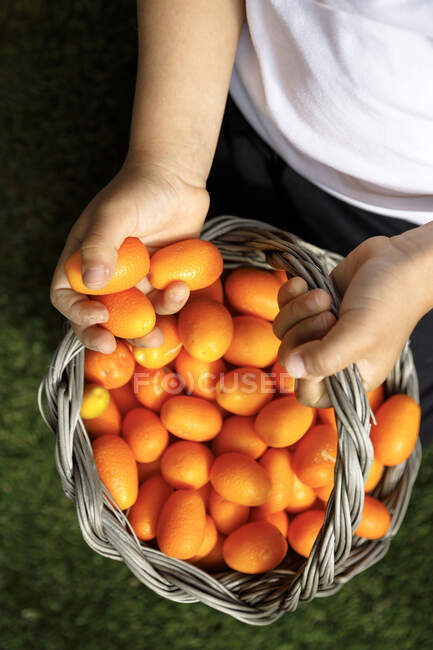 Boy holding basket of fresh kumquat — Stock Photo