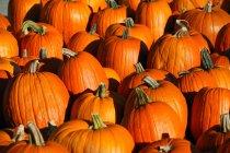 Cientos de naranjas calabazas - foto de stock