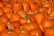 Centinaia di zucche arancioni — Foto stock