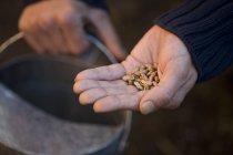 Primer plano de mano masculina semillas - foto de stock