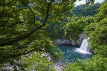 Blick auf den Wasserfall durch Bäume — Stockfoto