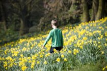 Boy standing in field of daffodils in spring time — Stock Photo