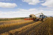 Kombinieren Sie beim Ernten von Weizen und Trailer im sonnigen ländlichen Bereich füllen — Stockfoto