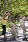 Lächelnde Frau mit drei Hunden im Park spielen — Stockfoto