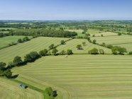 Vista aérea de campos de silagem de capim de verão sendo colhidas, terras agrícolas e país paisagem — Fotografia de Stock