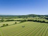 Vista aérea da colheitadeira de forragem cortando grama silagem colheita no campo e enchimento tratoras — Fotografia de Stock