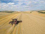 Harvest aerial of combine harvester cutting summer wheat field crop with tractor trailer on farm — Stock Photo