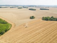 Harvest aerial of combine harvester cutting summer wheat field crop and tractor trailer on farm — Stock Photo