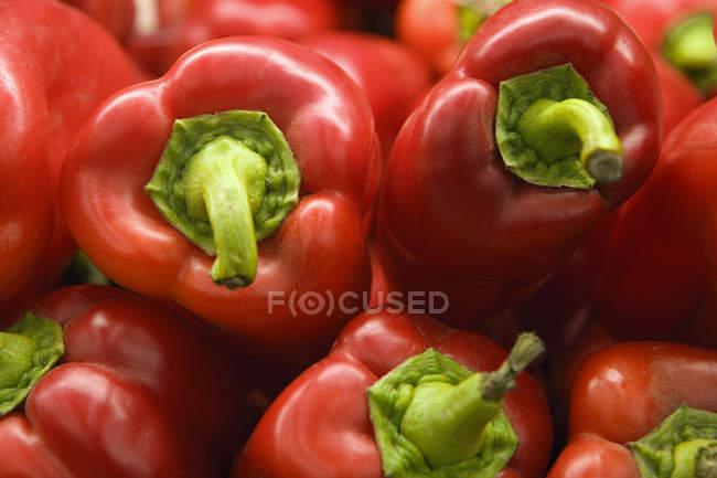 Выбор красного перца — стоковое фото