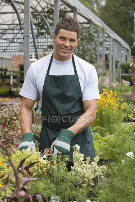 Man in apron and gardening gloves pruning flowers in garden centre — Stock Photo