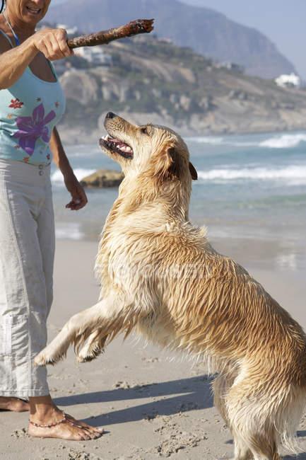 Vue latérale d'une femme d'âge mûr tenant le bâton au-dessus de chien mouillé sur la plage — Photo de stock