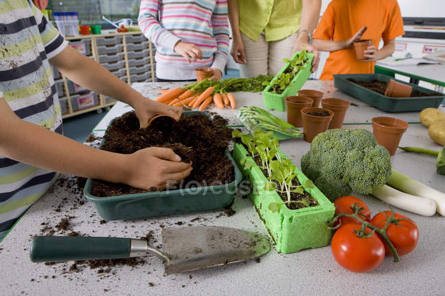 Teacher and students planting vegetables in classroom — Stock Photo