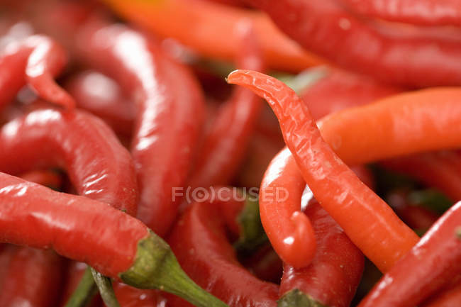 Large group of red chilli peppers — Stock Photo