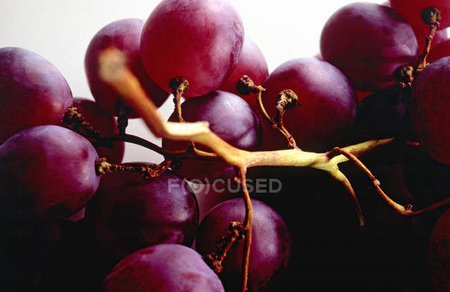 Still life of a bunch of grapes — Stock Photo