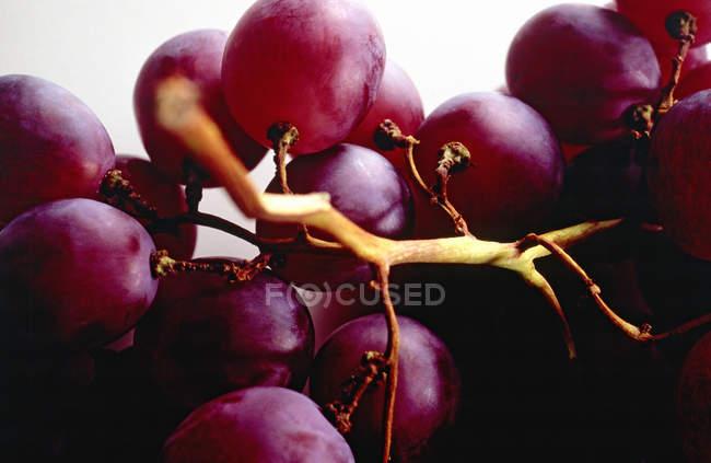 Stillleben mit ein paar Trauben — Stockfoto
