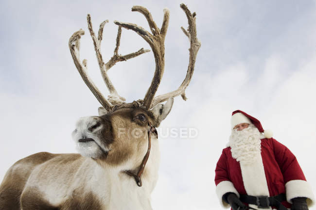 Santa Claus standing with reindeer — Stock Photo