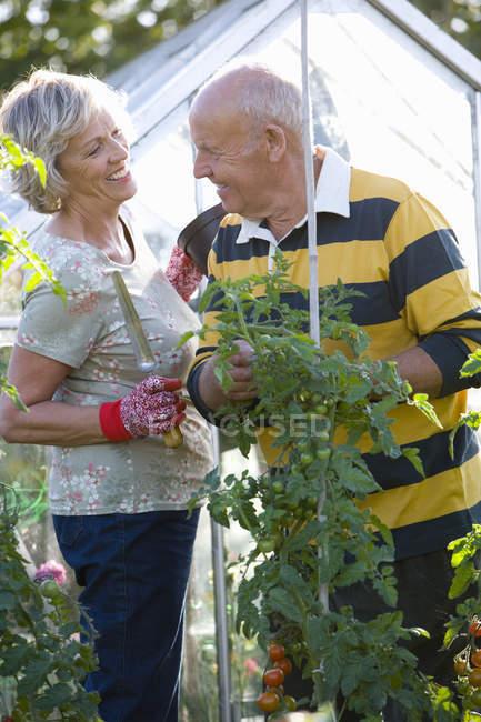 Усміхаючись Літня пара садівництво парникових — стокове фото