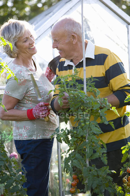 Sonriente pareja jardinería por efecto invernadero - foto de stock