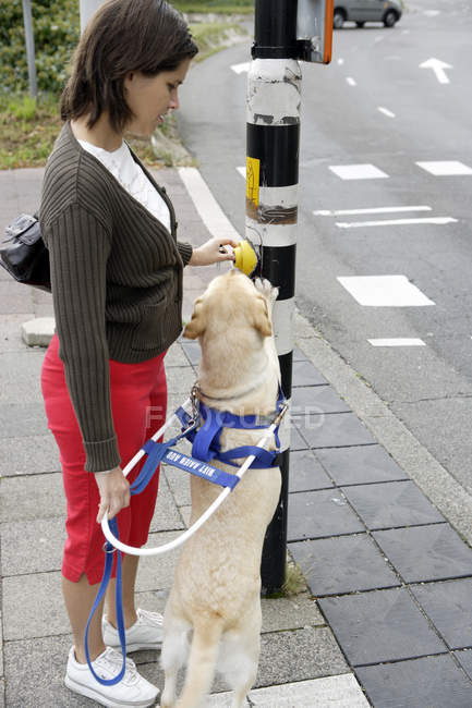 Blind woman and seeing eye dog at street crossing — Stock Photo