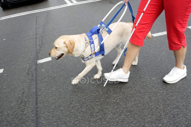 Blind woman and seeing eye dog crossing street — Stock Photo