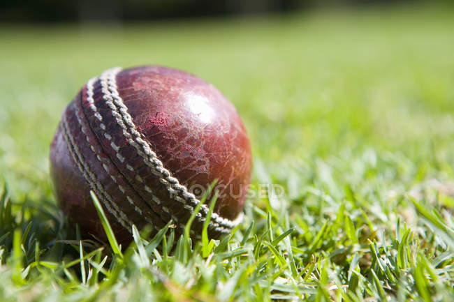 Cricket ball on grass — Stock Photo