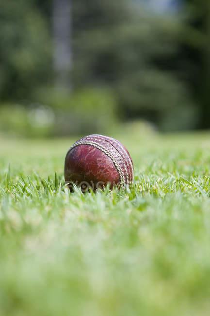 Крикет м'яч на траві — стокове фото