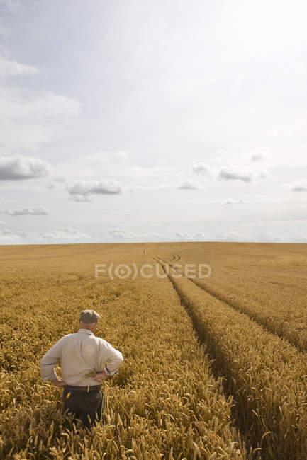 Paysan debout dans le champ de blé — Photo de stock
