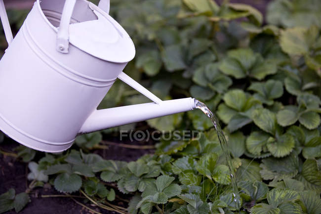 Close-up of watering plants with metal watering can — Stock Photo