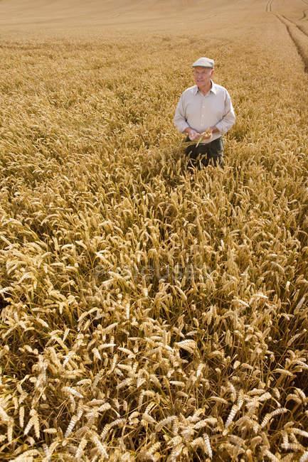 Paysan debout dans le champ de blé et en regardant de côté — Photo de stock