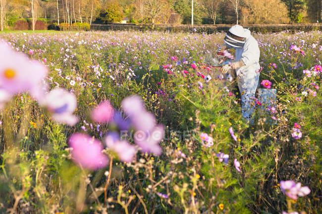 Prato di fiori - Foto stock, immagini royalty free | Focused