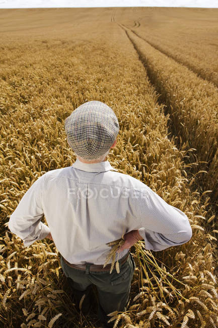 Senior agriculteur debout dans le champ de blé — Photo de stock