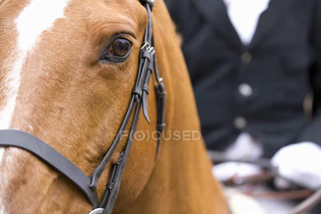 Cortar a imagem do cavalo com um caçador a cavalo — Fotografia de Stock