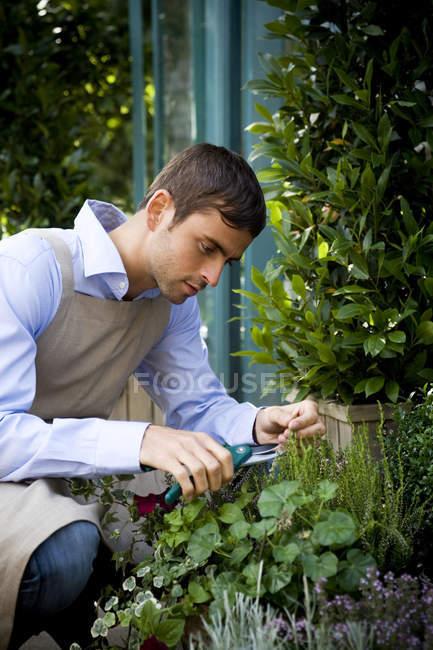 Male florist or gardener pruning shrubs — Stock Photo