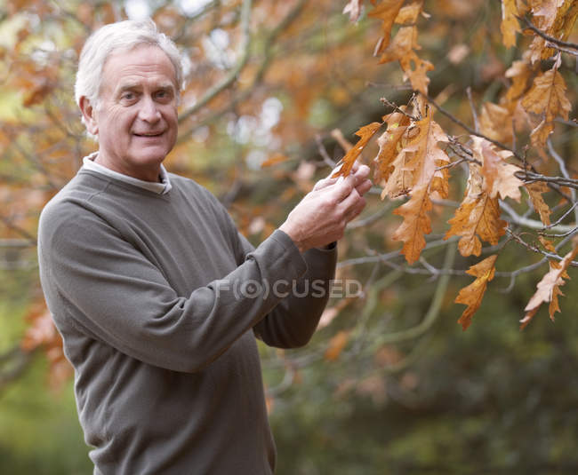 Senior man holding autumn foliage — Stock Photo
