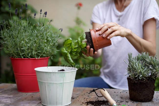 Femelle des plantes mise en pot sur la table les mains — Photo de stock