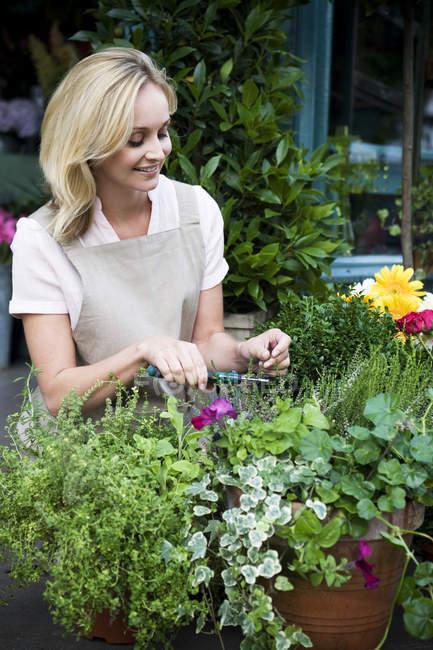 Frau Floristen oder Gärtner tendenziell Topfpflanzen, beschneiden und Gestaltung — Stockfoto