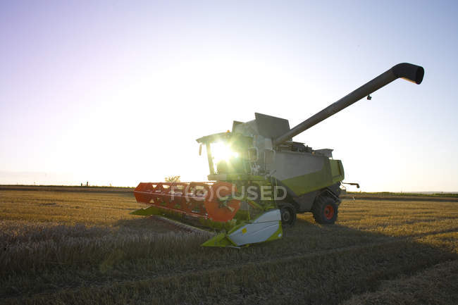 Sun shining behind combine harvesting wheat in rural field — Stock Photo