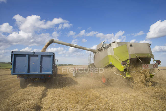 Combine harvesting wheat and filling trailer — Stock Photo