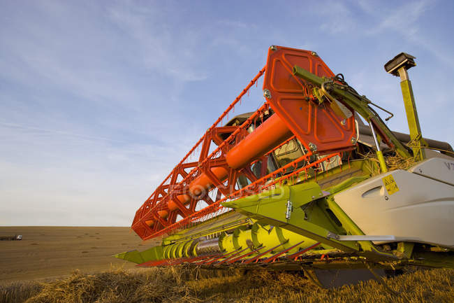Combine harvesting wheat in field — Stock Photo