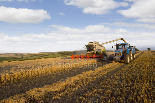 Combine harvesting wheat and filling trailer in sunny rural field — Stock Photo